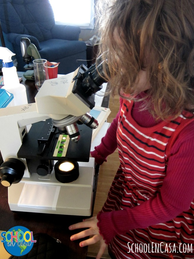 Microscope Investigations